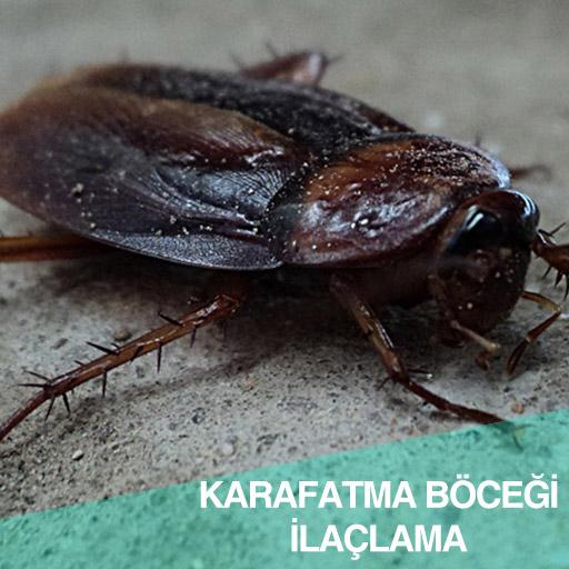Karafatma böceği ilaçlaması