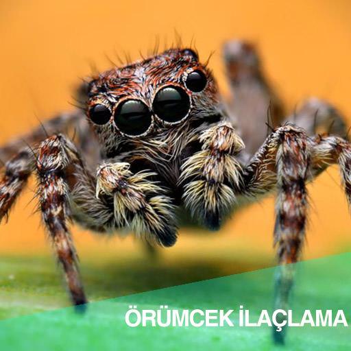 Örümcek ilaçlama