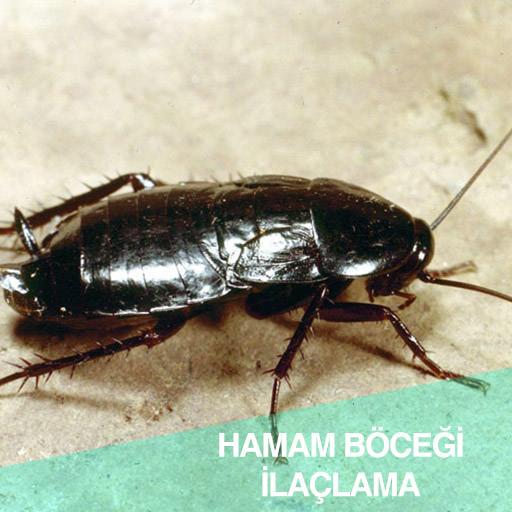 Hamam böceği ilaçlama